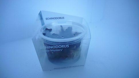 Echinodorus 'Little Mystery' - zselés