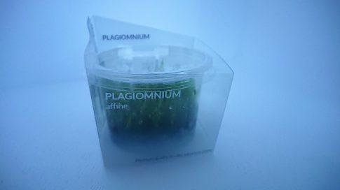 Plagiomnium affine